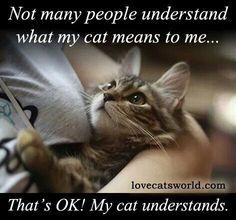 My cat understands...