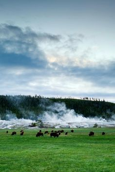 Yellowstone National Park: The nation's first national park offers new lodging. / #4 on @nytimes's list of 52 Places to Go in 2015