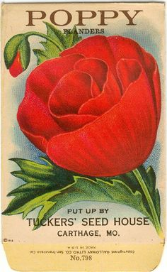 Vintage Flower Seed Packets | Vintage Flower Seed Packet Tuckers Seed House Lithograph POPPY ...