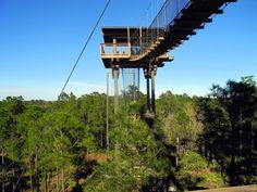 Experience Kissimmee: Florida Eco Safaris/Forever Florida Ziplining