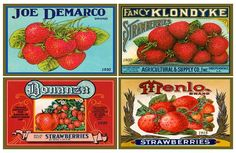 Strawberries Canning Labels Set 1 The images in this set of fabric panels by American Quilt Blocks are derived from canning labels from the Golden Age of Illustration, 1880s through 1930s. Canning labels are examples of ephemera. They were not printed to last for a long time, and as a result, they are very collectible and collected for their vintage graphics.