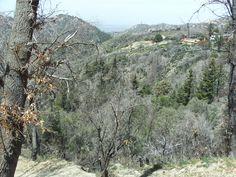 Going For A Walk In The San Bernardino Mountains