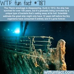 wreckage will disapeare by 2030 wtf Eaten up and digested at the bottom of the sea.Eaten up and digested at the bottom of the sea. Wow Facts, Wtf Fun Facts, Funny Facts, Random Facts, Random Stuff, Titanic History, Rms Titanic, Titanic Funny, Titanic Sinking