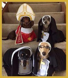Religión canina