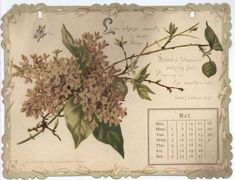 THE SHAKESPEARE CALENDAR FOR 1893 -mei