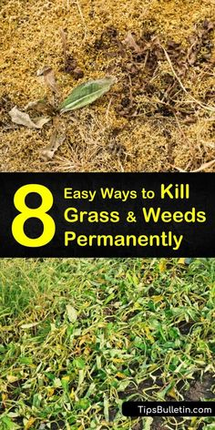 garden care schedule Discover what kills grass and weeds permanently usi Kill Weeds Naturally, How To Kill Grass, Killing Weeds, Grass Weeds, Weed Types, Ground Cover Plants, Weed Seeds, Weed Control, Garden Care