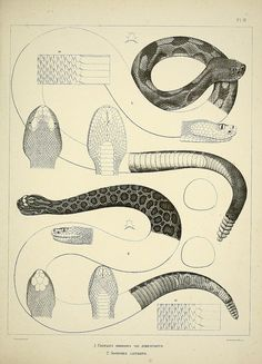 n246_w1150 by BioDivLibrary, via Flickr