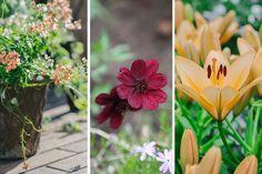 Istutusten ja nurmikon rajaus - Kotipuutarha Garden, Plants, Garten, Lawn And Garden, Gardens, Plant, Gardening, Outdoor, Yard