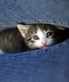 cute foster kitten snuggling