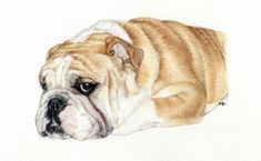 Hey, I found this really awesome Etsy listing at https://www.etsy.com/listing/228572629/dog-portrait-colored-pencil-dog-drawing