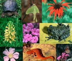 Biodiversity means differences in living beings. It implies infinite variations in the species, both plants and animals, of nature and their living environment. Species diversity is represented by morphological, physiology and genetic features, whereas ecosystem diversity shows the differences in habitats and biological communities.