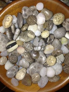 A Petoskey stone is fossilized ancient coral found on Lake Michigan beaches. Here are 5 tips for your Petoskey stone hunting adventure! Minerals And Gemstones, Rocks And Minerals, Crystals Minerals, Rock And Pebbles, Rocks And Gems, Rock Identification, Rock Tumbling, Petoskey Stone, Rock Hunting