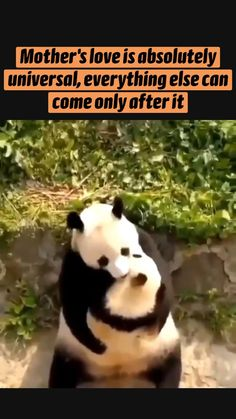 Cute Little Animals, Cute Funny Animals, Funny Animal Memes, Funny Animal Pictures, Cute Funny Babies, Cute Dogs, Animals And Pets, Nature Animals, Cute Animal Videos