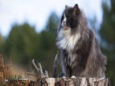 Precioso gato sentado en un tronco