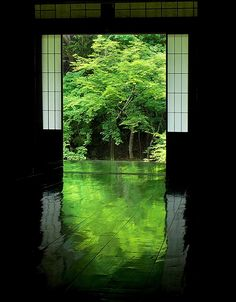 京都岩倉 実相院 Jissou-in Temple, Kyoto, Japan #Kyoto, #Green #緑 #床みどり
