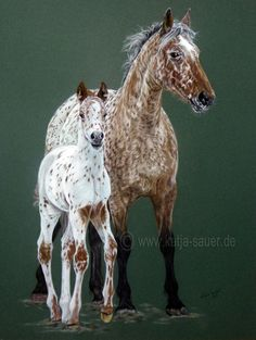 Pferdezeichnungen und Pferdeportraits in Pastellkreide - Knabstrupper - Tierzeichnungen und Tierportraits von Katja Sauer / Horse drawings and horse portraits in soft pastels - Animal paintings and animal portraits by Katja Sauer