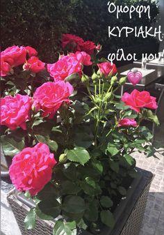 Mom And Dad, Plants, Photography, Photograph, Fotografie, Photoshoot, Plant, Planets, Fotografia