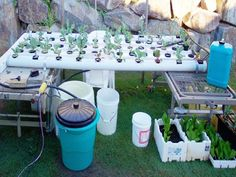 How to Build a Hydroponic Garden. Hydroponics is a gardening system where you grow plants in a soilless solution, usually water. A hydroponic garden has a percent faster growth rate and a larger yield than a soil garden. Hydroponics Setup, Hydroponic Farming, Hydroponic Growing, Aquaponics System, Growing Plants, Aquaponics Diy, Hydroponic Vegetables, Organic Gardening, Gardening Tips