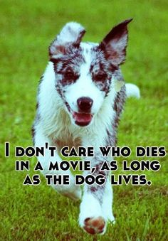 """I will never watch """"sad dog movies."""" Ever. I can watch sad people movies all day long... but put the dog in peril and I turn it off!"""