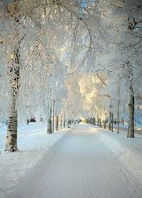 white avenue..//  Nunca he visto  nevar :(