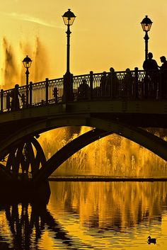 bridge over golden water - beautiful picture