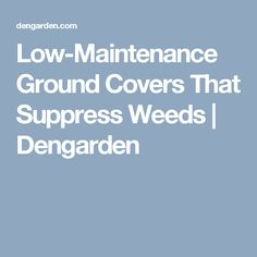 Low-Maintenance Ground Covers That Suppress Weeds | Dengarden