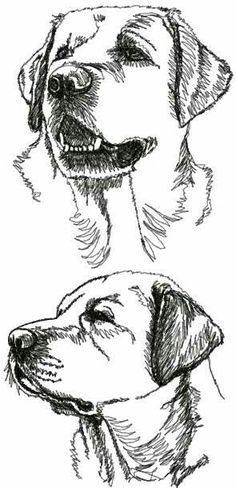 Mind Blowing Facts About Labrador Retrievers And Ideas. Amazing Facts About Labrador Retrievers And Ideas. Love Drawings, Drawing Sketches, Art Drawings, Pencil Sketching, Labrador Retrievers, Retriever Puppies, Animal Sketches, Animal Drawings, Drawing Animals