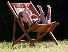 one day i will have a miniature pig, and i will name it chops