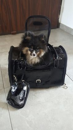 """Great bag, good quality, delivery very fast and dogs like too!))"" -Victoria B."