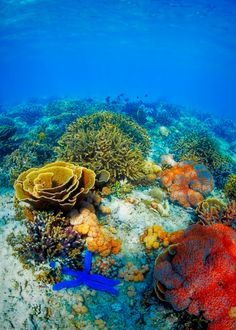 Beautiful colour! come explore Australia's beautiful Great Barrier Reef by clicking Here.... :) ... http://www.guideportdouglas.com/