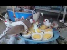 Egg Party For Amazing Birds