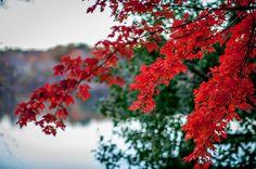 Autumn Walk Around Jamaica Pond I Photograph