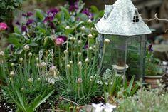~ love this fairy garden website http://www.weegarden.com/Wee_Garden_Web_Site/Welcome.html