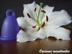 Opciones menstruales: Olores con la copa menstrual