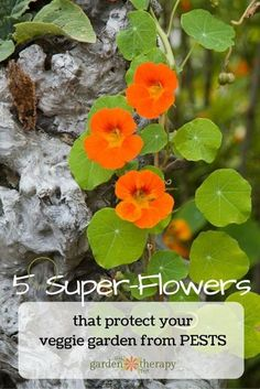 These Flowers with Super Powers Will Send Garden Pests Running | #sponsored