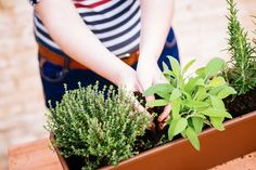 How to Make a Fall Herb Garden, No Matter Your Living Space