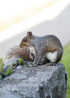 Chipmunks Burrowing In Your Yard Humane Chipmunk Removal Garden Pest Control Pinterest