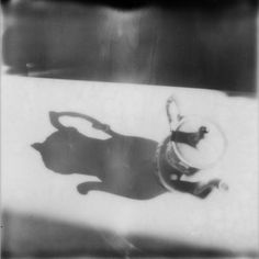 Tea Time by Sabrina Lesert: Tea Time by Sabrina Lesert by Sabrina Lesert #Photography #Polaroid #instant #film #Object