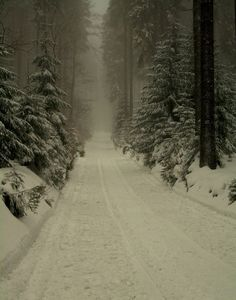 Reminds me of driving on the snowy backroads in Vermont :)