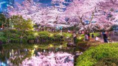 「桜押し」は、ひとりよがり観光戦略の象徴だ | レジャー・観光・ホテル | 東洋経済オンライン | 経済ニュースの新基準