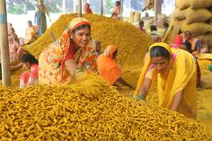 Turmeric being processed at a factory Its versatility is matched only by the faith of hundreds of millions, who use it daily in their food, on their faces and also for their gods. The blog is written by: Ulka Athale Article by: P.K. Ghanekar Photos by: Pradeep Sutar http://heritage-india.com/blog/turmeric/