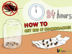 6 natural ways how to get rid of cockroaches