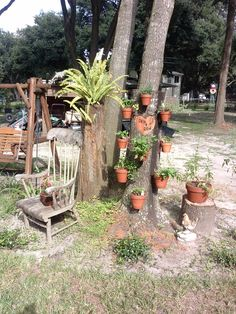 Orchids in pots on a tree secured by hangapot which come with stainless steel screws. Submitted by our customer Renee.
