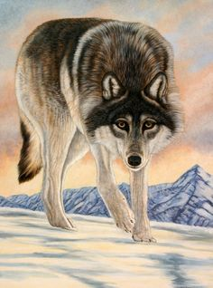 Arctic Wolf -On the Glacier-Animal Art