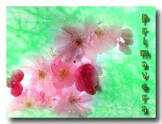 L' Albero di Natale: E' primavera