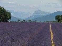 Christian Maurel (Sausset les pins) - Plateau de Valensole (04)