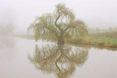 ~Foggy Morning Reflections~