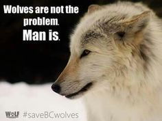 Seems man is always the problem. lol