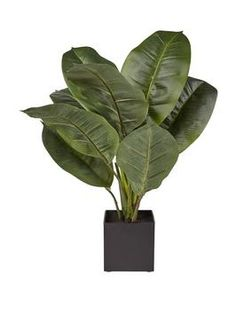 REAL TOUCH RUBBER PLANT