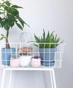 Plantenstandaard karwei Instagram: stephanieot